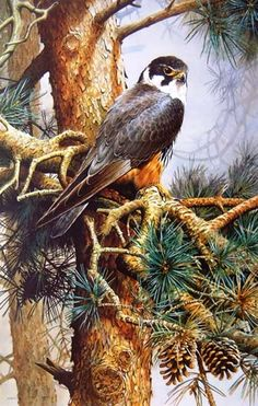 """Hobby"" by Terance James Bond. Visible Image x Print Only. Wildlife Paintings, Wildlife Art, Animals And Pets, Cute Animals, Bird Artwork, Bird Drawings, Bird Pictures, Art Plastique, Beautiful Birds"