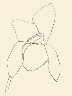 """Ellsworth Kelly : """"Cyclamen I"""" 1964 (hard-edge painting) Ellsworth Kelly, Matisse, Painting Inspiration, Art Inspo, Style Inspiration, Plant Drawing, Art Moderne, Action Painting, Oeuvre D'art"""