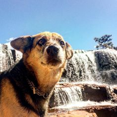 """""""Cristalina"""" famous town for being one of the largest centers of production and commerce of precious and semi-precious stones and crystals in Brazil. Take a look on our YouTube channel https://youtu.be/-JCxhNoPl9s #melevatrip #amelie #dog #waterfall #adventuretime #cristalina #goias #brazil #tagsforlikes #tbt #photooftheday #instagood #vanlifers #instafollow #couple #adventurers #like4like #likeforfollow #likeforlike #likeback"""