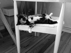 Cleopatra Katze | Pawshake