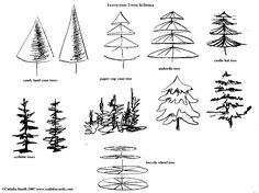 drawing evergreen trees on schema