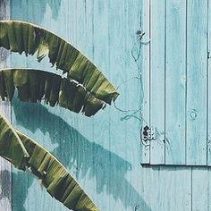 #2016 #design #decoration #moderne #exterieur #interieur #plantes #inspiration #moodboard #coconning #TBC #food #DIY