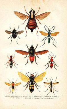 1891 Antique Entomology Chromolithograph