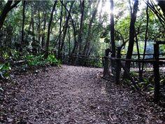 Se você quer praticar um esporte, curtir a natureza e aproveitar o fim de semana de um jeito diferente, não pode perder o Trilhas Urbanas, projeto que realiza duas trilhas no Parque Alfredo Volpi em abril.