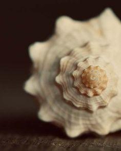 Pics Art, Ocean Life, Coastal Living, Coastal Decor, Under The Sea, Sea Shells, Conch Shells, Mother Nature, Seaside