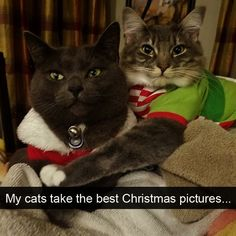 10 Hilarious Cat Snapchats That Are Im-paw-sible Not To Laugh At