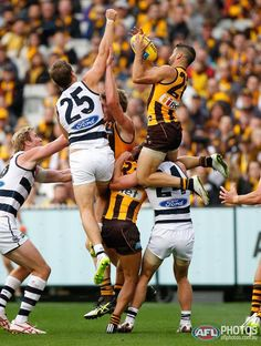 Hawks enjoy a victory over Geelong at the MCG on Easter Monday. Australian Football League, Beefy Men, World Of Sports, Super Sport, Melbourne, Winter Sports, Hawks, Football Team, Rugby