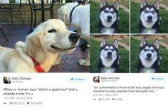Honden zijn naast katten, geweldig leuke dieren. Ze zijn sociaal vaardig en brengen bij hun baasjes vaak een grote glimlach op het gezicht. We zijn zo gek op ze, dat we dit dan ook al te graag delen met de online wereld. Deze 15 tweets laten zien hoe dol we op deze viervoeters zijn. 1. Die herkenbare blik… […]  The post 15 hilarische en ontroerende tweets met honden in de hoofdrol appeared first on Froot.nl.