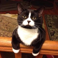 My name is Little Heart, can you guess why? Submitted by: DP Dev #catlife #tuxedocat #catoftheday #whatcatsthink #pawfection #catsrule #catlover #catlady #catblogger #heart