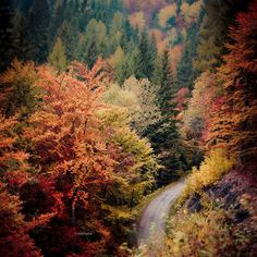 All sizes | curva tra gli alberi d'autunno, via Flickr.