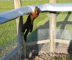 Zero invasive predator fencing - ZIP WEBSITE  HOW LOW CAN YOU GO? A new approach to predator fencing Stock Fencing, Jump Over, Feral Cats, Predator, Ecology, Conservation, Fence, Horses, Canning