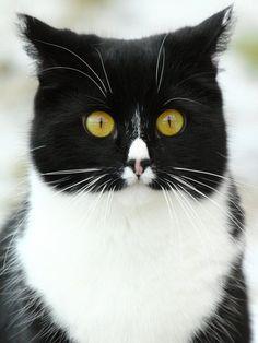 フクロウ猫04
