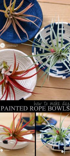 Air Plants in Painted Rope Bowls #michaelsmakers #diy