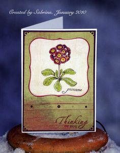 New Year Primrose by Cook22 - Cards and Paper Crafts at Splitcoaststampers