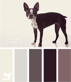 color palettes, design seeds, color schemes, new homes, complementary paint colors, boston terrier, hous, color tones, boston tone