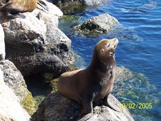 Monterey, CA   These guys were everywhere!!!!  <3