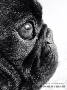 Pugface profile.