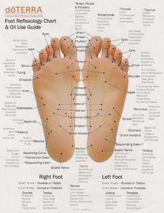 Reflexology & corresponding oils for feets & hands