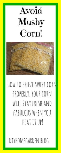 If you're thinking about freezing a batch of sweet corn for later, then this one's for you! Learn the right way to freeze corn without getting mushy. Freezing Fresh Corn, Freezing Fruit, Freezing Vegetables, Frozen Vegetables, Veggies, Canning Vegetables, Frozen Sweet Corn Recipe, Sweet Corn Recipes, Frozen Corn