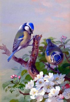Antique Painting Of Blue Tits In Apple Blossoms Tree by JpegArt