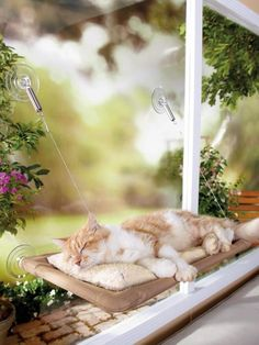 The Best Cat Condos, Beds and Shelves: Short on space? The Sunny Seat Cat Bed attaches to most windows and can hold up to 50 pounds with the support of industrial-strength suction cups. Cats love sunning themselves in the window, so this is a purrfect spot to enjoy the view of the great outdoors. From DIYnetwork.com