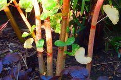 Alternative Eden Exotic Garden: Beyond Leaves and Flowers