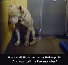 When does it end? Adopt a lost soul.