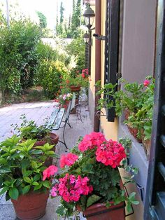 Our main entrance Lucca, Main Entrance, Tuscany, Apartments, Countryside, Paths, Villa, Spa, Holidays