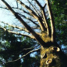 【mikiyonoto】さんのInstagramの写真をピンしています。《🌲森の精霊 * * 昨日とは打って変わって真冬並みに冷え込んでいます。 * 森の精霊たちも寒さを堪えて春を待ち望んでいるようです。 * * * #樹 #奇林 #擬人化 #原生林 #自然 #樹木  #林 #森の精霊 #幹  #art_of_japan_ #fantasy #forest #green #ig_gallery #ig_myshot #instagramjapan  #nature #naturelovers #spirit #soul  #team_jp_ #tree #whim_life #woods #wp_japan  location:#Tokushima》