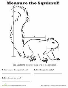 Worksheets: Measure Length: Squirrel!