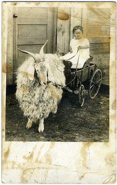 Primitive Photo - Girl In A Goat Cart