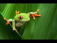 Virtual Field Trip - Amazon Rainforest - YouTube