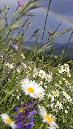 Alpine meadow = feeling alive and energised in a vast and beautiful landscape