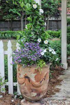 - mandevilla, sunpatiens, creeping jenny - 3 Must-Have Plants for Summer with Carmen Johnston Gardens