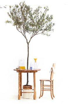 Diseño de Interiores Green   Olivo en maceta y mobiliario de madera de olivo • 'Taste of Wood', de Antonio Aricò.