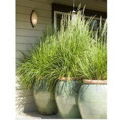 Did you know that Lemon Grass is an insect/mosquito repellent?  If you plant it in outdoor areas where you gather, it's a great way to keep the mosquitos away! Better yet, it's hearty, pretty, deer resistant and easy to grow.