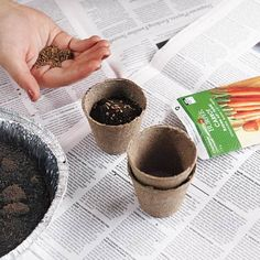 Photo: Laura Moss | thisoldhouse.com | Give seedlings a nitrogen boost by stirring leftover coffee grounds into soil or a watering can
