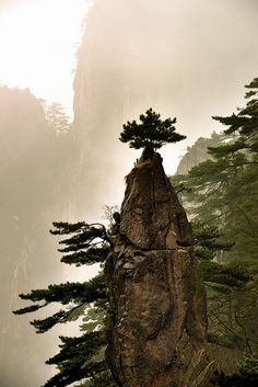 Huangshan, China. Another tree I hope you don't fall out of! kn