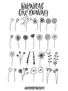 Botanical Line Drawing, Floral Drawing, Botanical Drawings, Daisy Drawing, Simple Flower Drawing, Easy Flower Drawings, Simple Flowers To Draw, Flower Pattern Drawing, Simple Flower Design