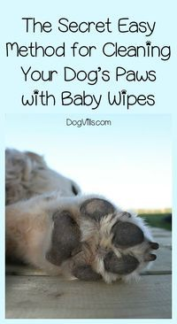 Can plain old baby wipes really clean your dog�s paws effectively? The answer may surprise you! Check it out!