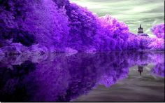 Purple, Trees, Nature, Landscape, Lake, Lighthouse - HD wallpapers