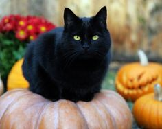 black cats pictures | Black Cat - Random Wallpaper (32500173) - Fanpop fanclubs