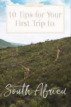 South Africa is an amazing destination for all types of travelers. Whether you're an adventure junkie or you let your stomach dictate your travels, there's Africa Destinations, Amazing Destinations, Travel Destinations, Travel Guides, Travel Tips, Golf Travel, Quick Travel, Travel Deals, Travel Hacks