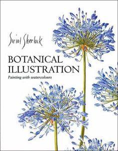 Sueann -  Botanical Illustration by Siriol Sherlock