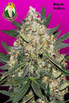 73 Best Weed Pictures images in 2019 | Marijuana plants