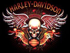 Harley Davidson skull and wings Harley Davidson Logo, Wallpaper Harley Davidson, Harley Davidson Kunst, Harley Davidson Tattoos, Harley Davidson Motorcycles, Hd Motorcycles, Moto Logo, Biker Quotes, Motorcycle Quotes