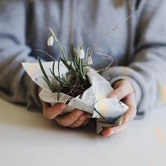 """#sogoodineveryway  """"[ #sgiew_SPRING] Oh willowday yes!   🌱 https://instagram.com/p/BhYRu_AA4qP/  Tag your posts now with #sgiew_spring for a chance to be featured & #win a little something special to put a #springinyourstep 🌱 #snowdrops #signsofspring  #littlestoriesofmylife #sgiew"""