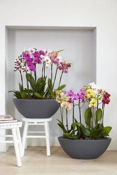 Orchid Planters, Orchid Flower Arrangements, Orchids Garden, Orchid Centerpieces, House Plants Decor, Plant Decor, Plantas Indoor, Natural Landscaping, Landscaping Ideas