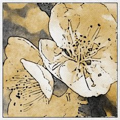 I Love this pen and watercolor flower.