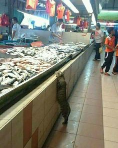 'I want dat fish right there, no the bigger one!' Cat says.